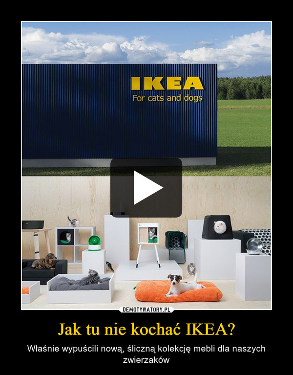 Jak tu nie kochać IKEA? – Właśnie wypuścili nową, śliczną kolekcję mebli dla naszych zwierzaków