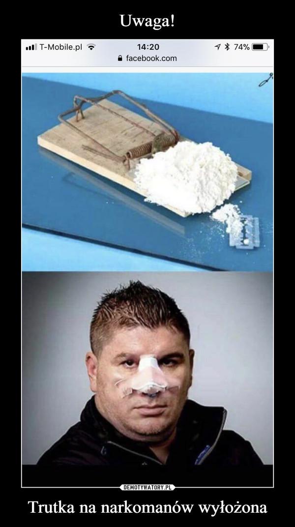 Trutka na narkomanów wyłożona –