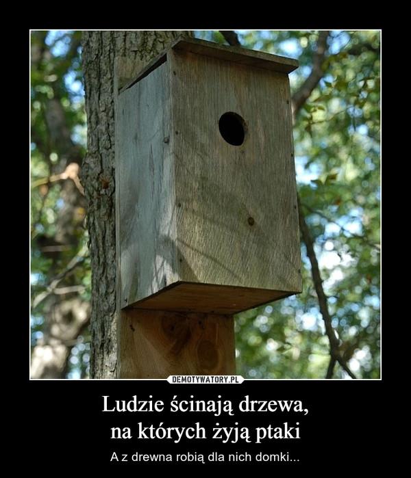 Ludzie ścinają drzewa,na których żyją ptaki – A z drewna robią dla nich domki...