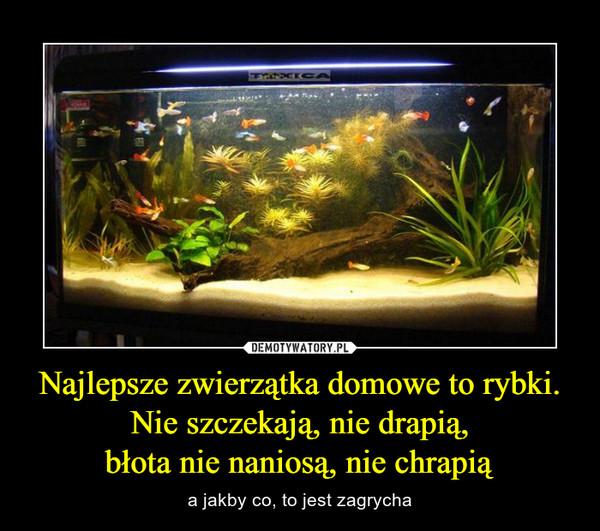 Najlepsze zwierzątka domowe to rybki. Nie szczekają, nie drapią,błota nie naniosą, nie chrapią – a jakby co, to jest zagrycha