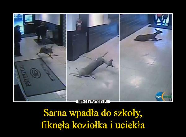 Sarna wpadła do szkoły,fiknęła koziołka i uciekła –