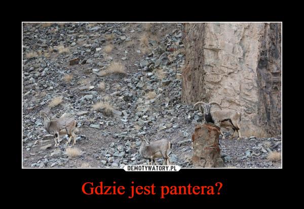Gdzie jest pantera? –