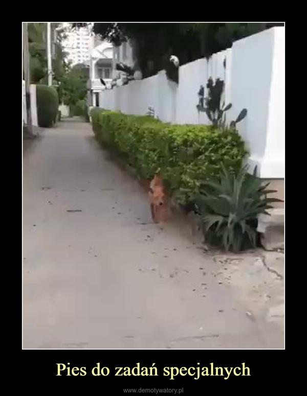 Pies do zadań specjalnych –