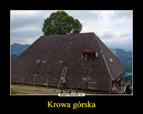 Krowa górska