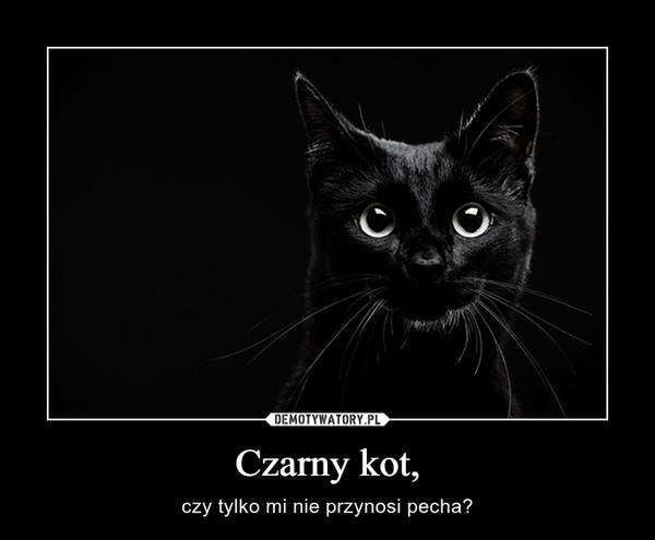 Czarny kot, – czy tylko mi nie przynosi pecha?