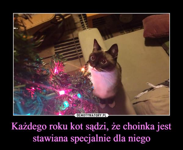 Każdego Roku Kot Sądzi że Choinka Jest Stawiana Specjalnie Dla