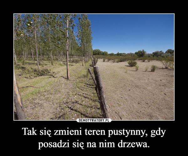 Tak się zmieni teren pustynny, gdy posadzi się na nim drzewa. –