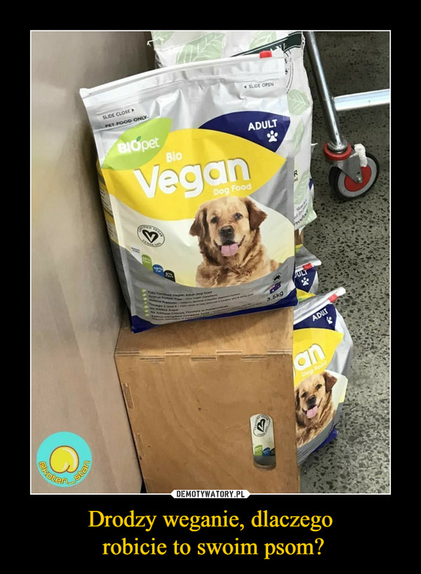 Drodzy weganie, dlaczego robicie to swoim psom? –