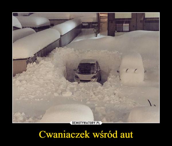 Cwaniaczek wśród aut –