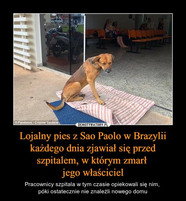 Lojalny pies z Sao Paolo w Brazylii każdego dnia zjawiał się przed szpitalem, w którym zmarł jego właściciel – Pracownicy szpitala w tym czasie opiekowali się nim, póki ostatecznie nie znaleźli nowego domu