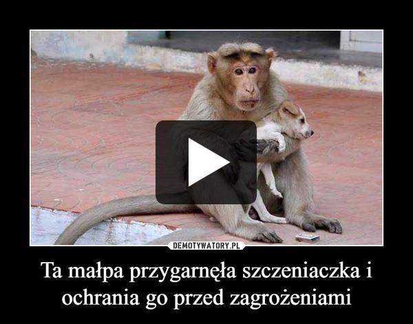 Ta małpa przygarnęła szczeniaczka i ochrania go przed zagrożeniami –