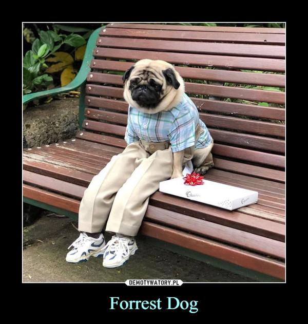 Forrest Dog –