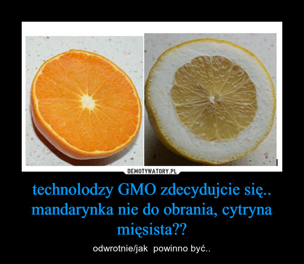 technolodzy GMO zdecydujcie się.. mandarynka nie do obrania, cytryna mięsista?? – odwrotnie/jak  powinno być..