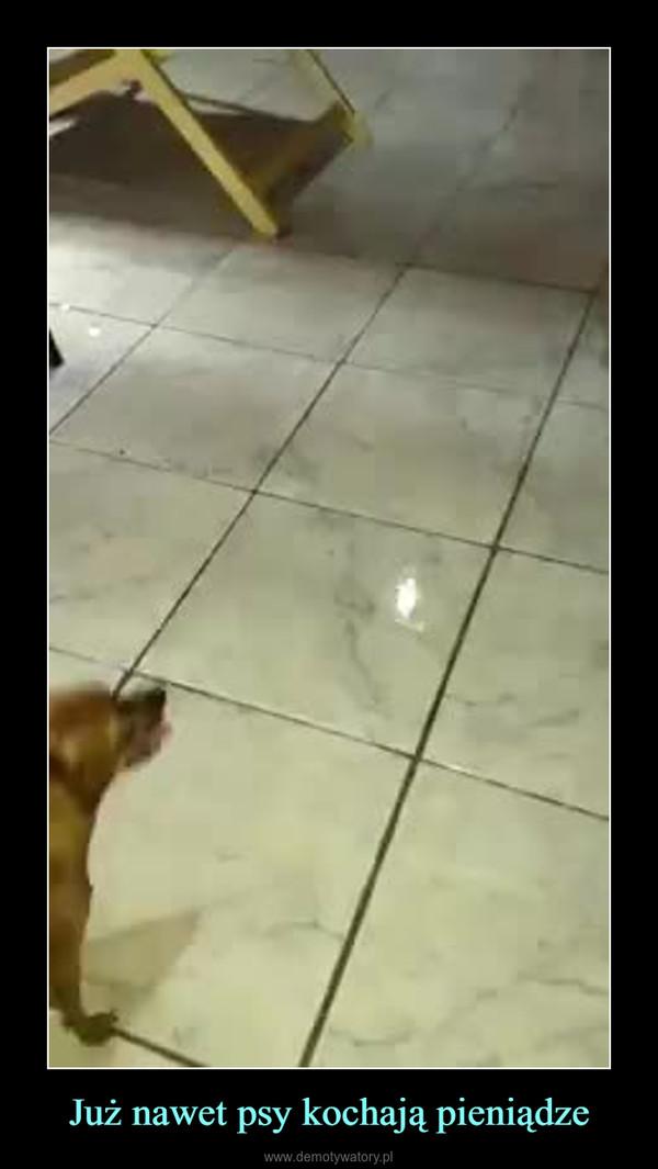 Już nawet psy kochają pieniądze –