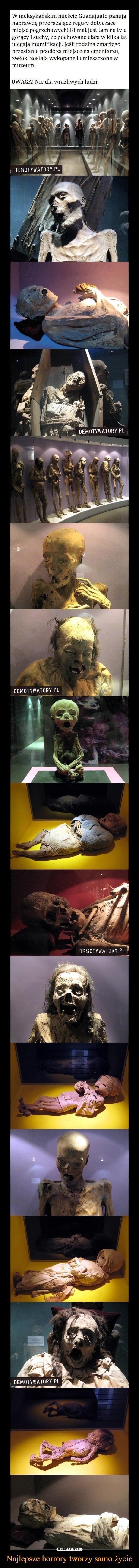 Najlepsze horrory tworzy samo życie –  W meksykańskim mieścle Guanajuato panujqnaprawdę przeražalace reguly dotyczącemiejscgoracy I suchy,ze pochowane clala w lalka latulegają mumifikacji. Jesli rodzina zmartegoprzestanie placić za miejsce na cmentarzuewloki zostaja wykopane i umieszczone w! Klimat jest tam na tyleUWAGAINie dla wraliwych ludzi