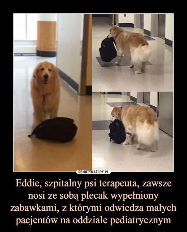 Eddie, szpitalny psi terapeuta, zawsze nosi ze sobą plecak wypełniony zabawkami, z którymi odwiedza małych pacjentów na oddziale pediatrycznym –