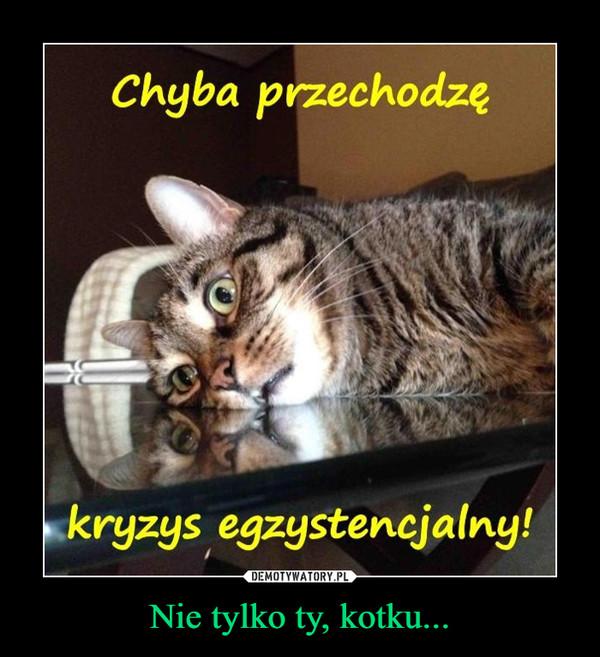 Nie tylko ty, kotku... –
