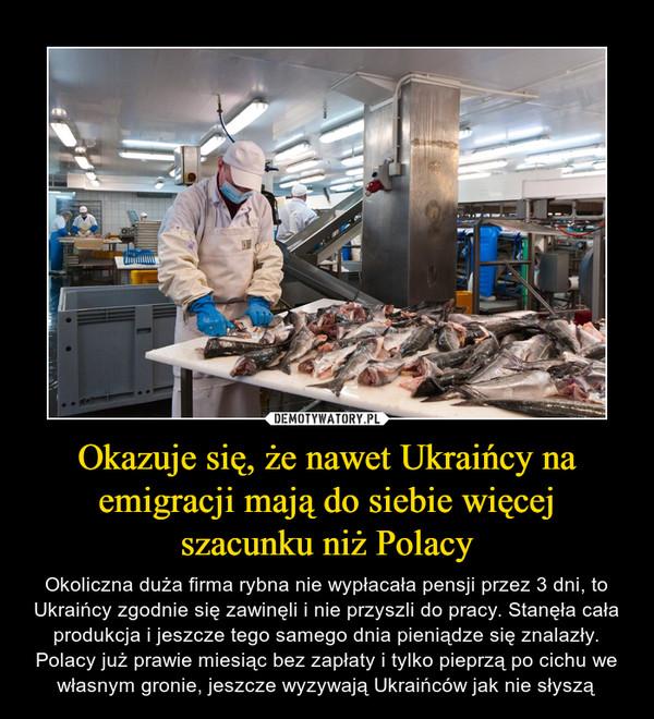 Okazuje się, że nawet Ukraińcy na emigracji mają do siebie więcej szacunku niż Polacy – Okoliczna duża firma rybna nie wypłacała pensji przez 3 dni, to Ukraińcy zgodnie się zawinęli i nie przyszli do pracy. Stanęła cała produkcja i jeszcze tego samego dnia pieniądze się znalazły. Polacy już prawie miesiąc bez zapłaty i tylko pieprzą po cichu we własnym gronie, jeszcze wyzywają Ukraińców jak nie słyszą