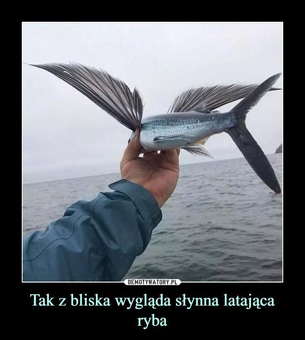 Tak z bliska wygląda słynna latająca ryba –