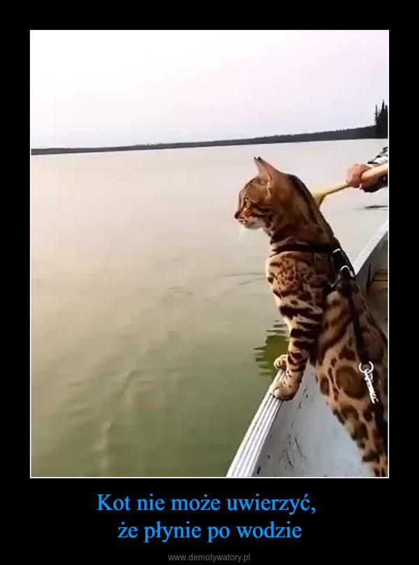 Kot nie może uwierzyć, że płynie po wodzie –