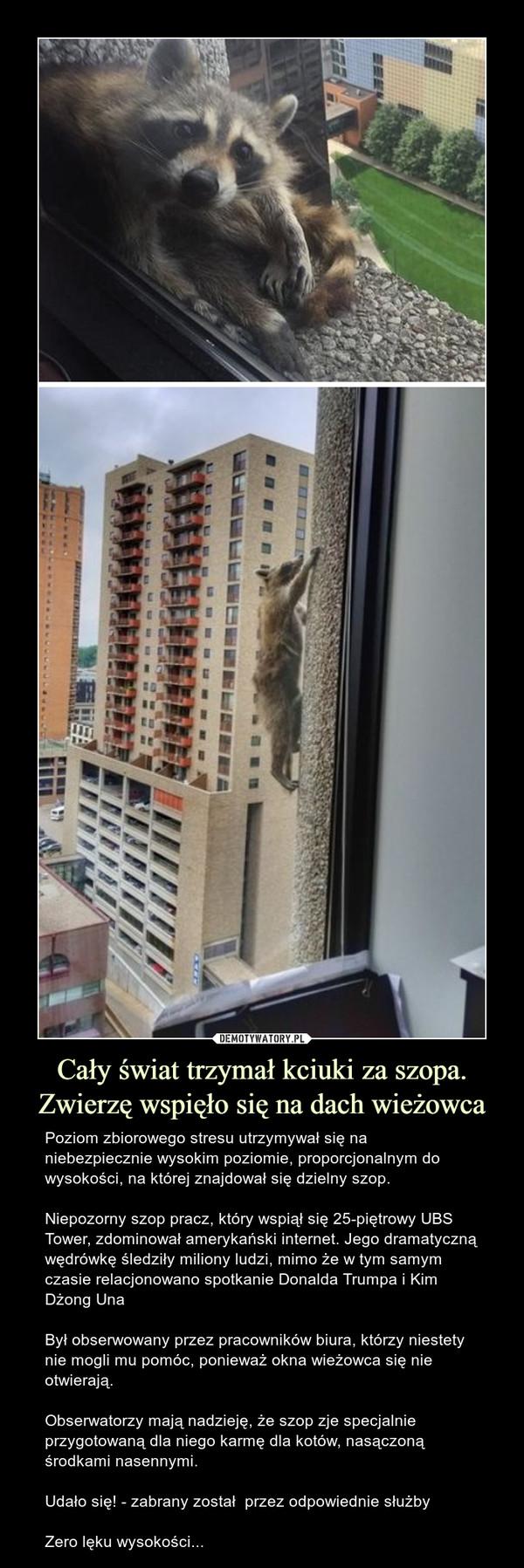 Cały świat trzymał kciuki za szopa. Zwierzę wspięło się na dach wieżowca – Poziom zbiorowego stresu utrzymywał się na niebezpiecznie wysokim poziomie, proporcjonalnym do wysokości, na której znajdował się dzielny szop.Niepozorny szop pracz, który wspiął się 25-piętrowy UBS Tower, zdominował amerykański internet. Jego dramatyczną wędrówkę śledziły miliony ludzi, mimo że w tym samym czasie relacjonowano spotkanie Donalda Trumpa i Kim Dżong UnaBył obserwowany przez pracowników biura, którzy niestety nie mogli mu pomóc, ponieważ okna wieżowca się nie otwierają.Obserwatorzy mają nadzieję, że szop zje specjalnie przygotowaną dla niego karmę dla kotów, nasączoną środkami nasennymi.Udało się! - zabrany został  przez odpowiednie służbyZero lęku wysokości...