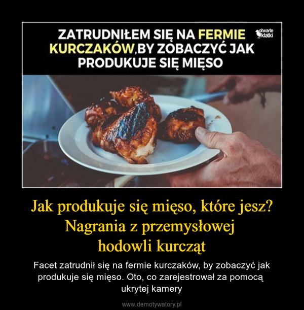 Jak produkuje się mięso, które jesz? Nagrania z przemysłowej hodowli kurcząt – Facet zatrudnił się na fermie kurczaków, by zobaczyć jak produkuje się mięso. Oto, co zarejestrował za pomocą ukrytej kamery