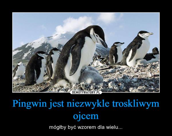 Pingwin jest niezwykle troskliwym ojcem – mógłby być wzorem dla wielu...