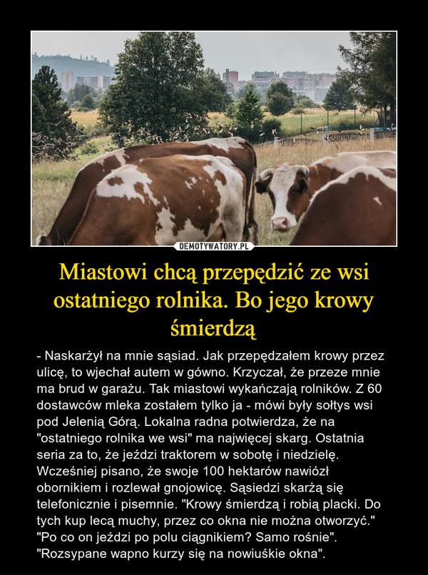 """Miastowi chcą przepędzić ze wsi ostatniego rolnika. Bo jego krowy śmierdzą – - Naskarżył na mnie sąsiad. Jak przepędzałem krowy przez ulicę, to wjechał autem w gówno. Krzyczał, że przeze mnie ma brud w garażu. Tak miastowi wykańczają rolników. Z 60 dostawców mleka zostałem tylko ja - mówi były sołtys wsi pod Jelenią Górą. Lokalna radna potwierdza, że na """"ostatniego rolnika we wsi"""" ma najwięcej skarg. Ostatnia seria za to, że jeździ traktorem w sobotę i niedzielę. Wcześniej pisano, że swoje 100 hektarów nawiózł obornikiem i rozlewał gnojowicę. Sąsiedzi skarżą się telefonicznie i pisemnie. """"Krowy śmierdzą i robią placki. Do tych kup lecą muchy, przez co okna nie można otworzyć."""" """"Po co on jeździ po polu ciągnikiem? Samo rośnie"""". """"Rozsypane wapno kurzy się na nowiuśkie okna""""."""