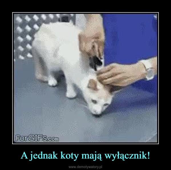 A jednak koty mają wyłącznik! –