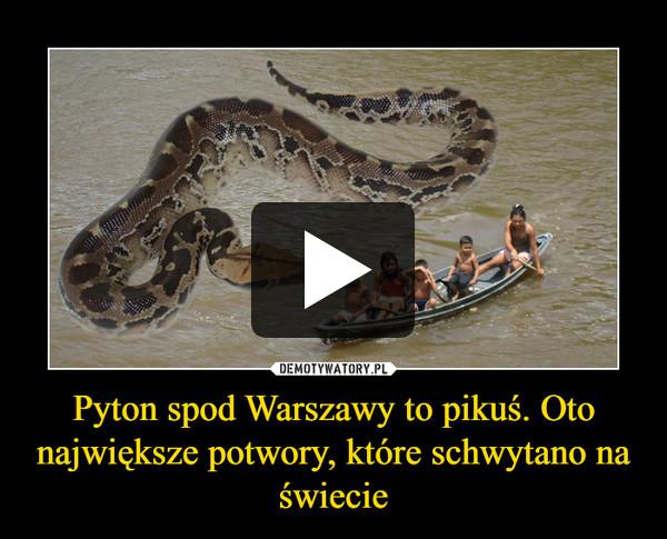 Pyton spod Warszawy to pikuś. Oto największe potwory, które schwytano na świecie –