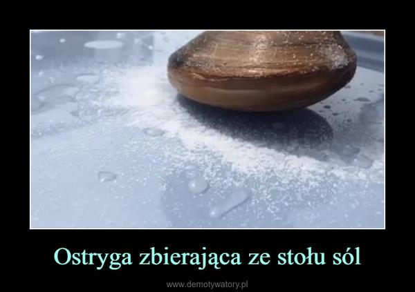 Ostryga zbierająca ze stołu sól –