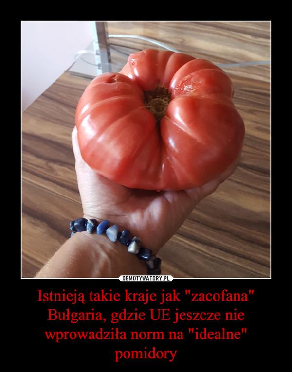 """Istnieją takie kraje jak """"zacofana"""" Bułgaria, gdzie UE jeszcze nie wprowadziła norm na """"idealne"""" pomidory –"""