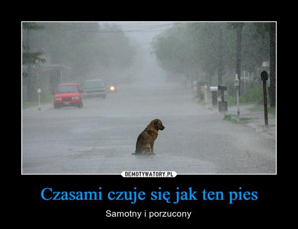 Czasami czuje się jak ten pies – Samotny i porzucony