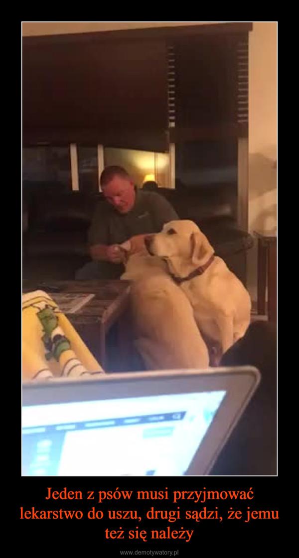 Jeden z psów musi przyjmować lekarstwo do uszu, drugi sądzi, że jemu też się należy –