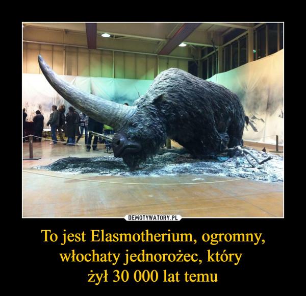 To jest Elasmotherium, ogromny, włochaty jednorożec, który żył 30 000 lat temu –