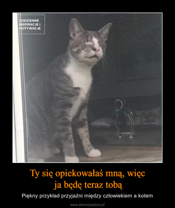 Ty się opiekowałaś mną, więc ja będę teraz tobą – Piękny przykład przyjaźni między człowiekiem a kotem