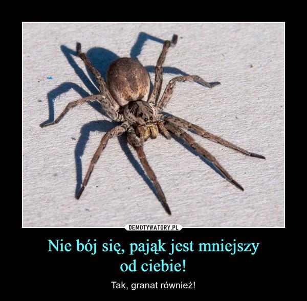 Nie bój się, pająk jest mniejszyod ciebie! – Tak, granat również!