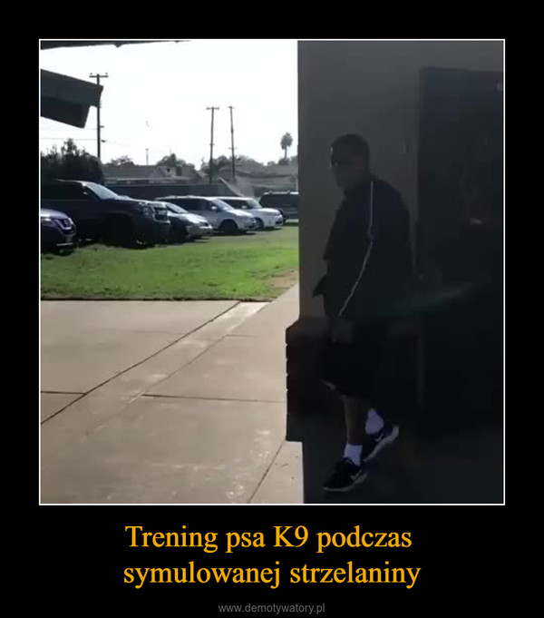Trening psa K9 podczas symulowanej strzelaniny –