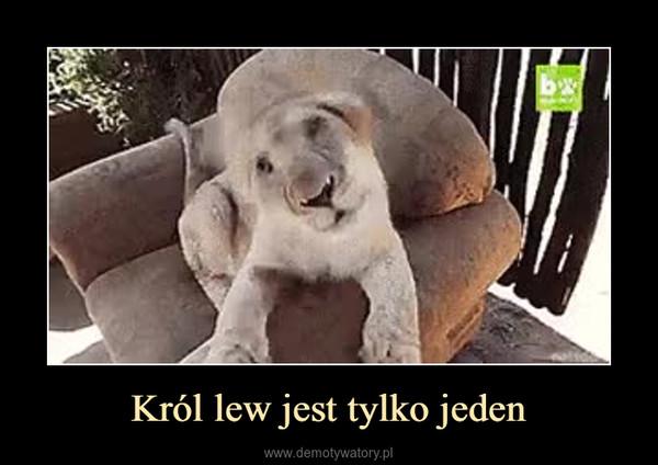 Król lew jest tylko jeden –