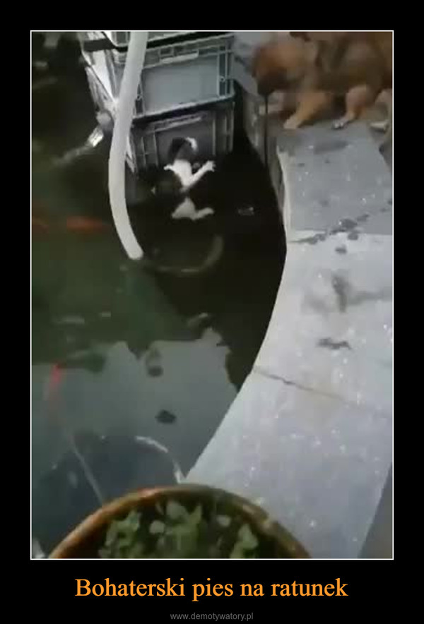 Bohaterski pies na ratunek –