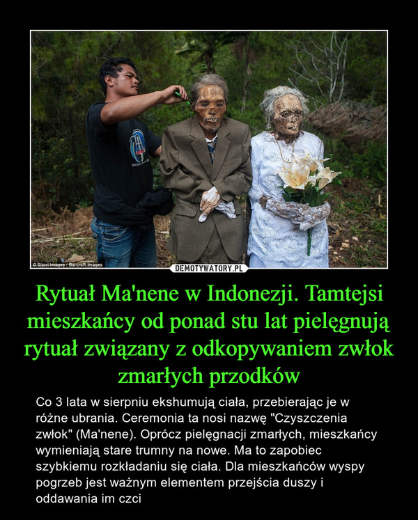 """Rytuał Ma'nene w Indonezji. Tamtejsi mieszkańcy od ponad stu lat pielęgnują rytuał związany z odkopywaniem zwłok zmarłych przodków – Co 3 lata w sierpniu ekshumują ciała, przebierając je w różne ubrania. Ceremonia ta nosi nazwę """"Czyszczenia zwłok"""" (Ma'nene). Oprócz pielęgnacji zmarłych, mieszkańcy wymieniają stare trumny na nowe. Ma to zapobiec szybkiemu rozkładaniu się ciała. Dla mieszkańców wyspy pogrzeb jest ważnym elementem przejścia duszy i oddawania im czci"""