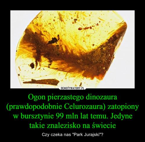 Ogon pierzastego dinozaura (prawdopodobnie Celurozaura) zatopiony w bursztynie 99 mln lat temu. Jedyne takie znalezisko na świecie