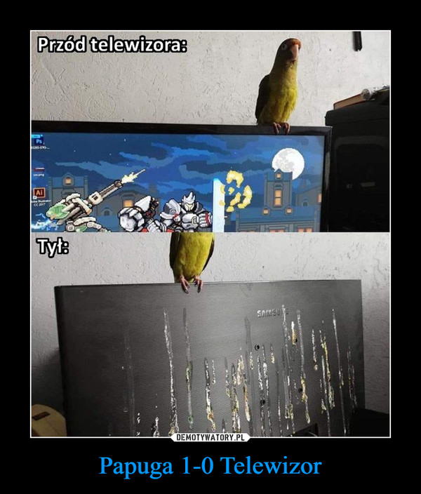 Papuga 1-0 Telewizor –