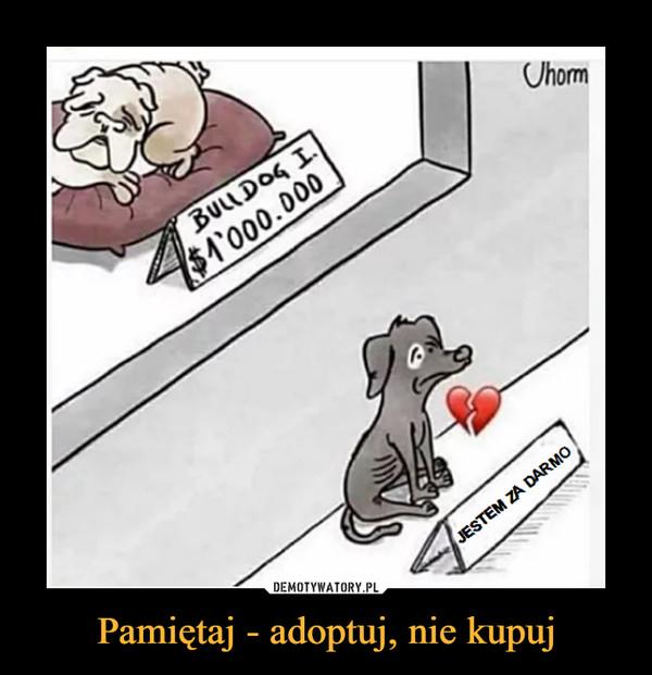 Pamiętaj - adoptuj, nie kupuj –  Jestem za darmo buldog
