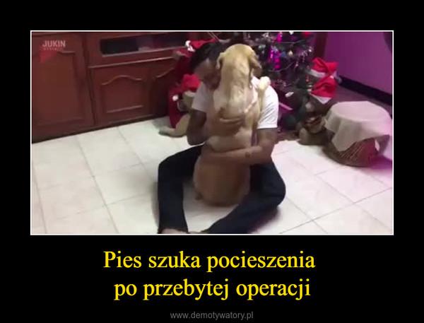 Pies szuka pocieszenia po przebytej operacji –