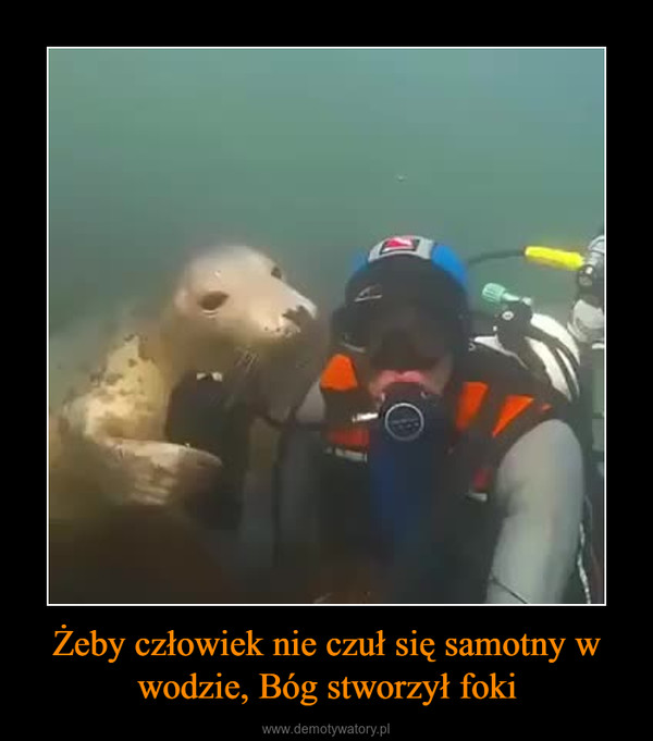 Żeby człowiek nie czuł się samotny w wodzie, Bóg stworzył foki –