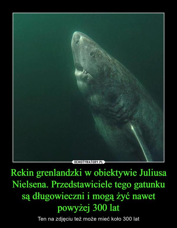 Rekin grenlandzki w obiektywie Juliusa Nielsena. Przedstawiciele tego gatunku są długowieczni i mogą żyć nawet powyżej 300 lat – Ten na zdjęciu też może mieć koło 300 lat