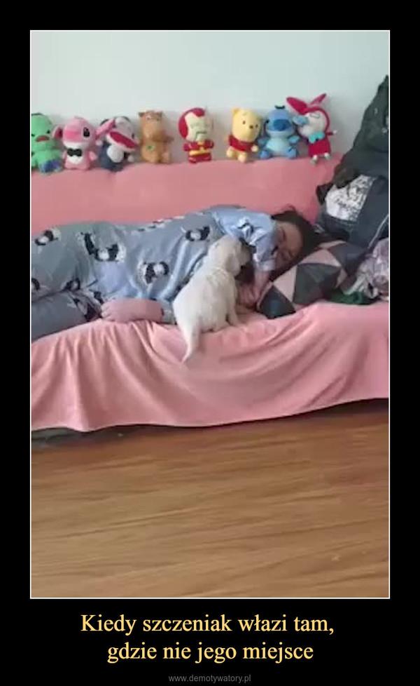 Kiedy szczeniak włazi tam, gdzie nie jego miejsce –