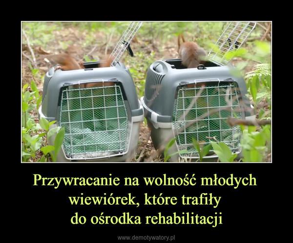 Przywracanie na wolność młodych wiewiórek, które trafiły do ośrodka rehabilitacji –