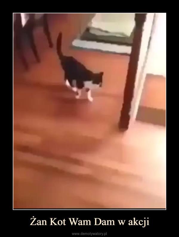 Żan Kot Wam Dam w akcji –